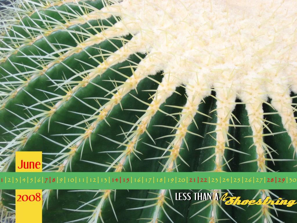 Cactus 1024x768