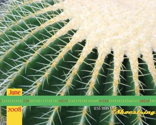 Cactus 1280x1024