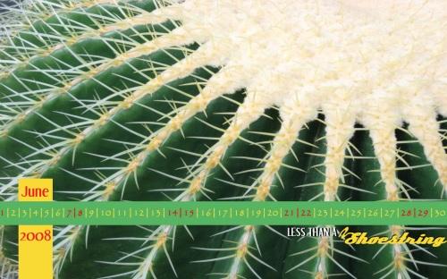 Cactus 1280x800